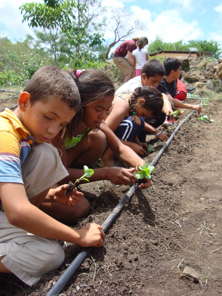 The students of the Fabretto School were involved in helping with the Huerto.