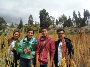 In the Quinoa fields