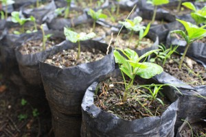 We spent part of our day weeding coffee seedlings at La Garnacha, the organic farm we visited on Global Business Day.
